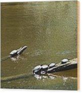 Sunbathing Turtles Wood Print