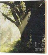 Sunbeam Tree Wood Print