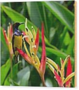 Sunbird On Heliconia Ginger Flowers Singapore Wood Print