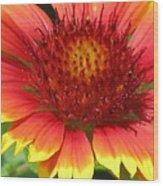 Sunburst 05 Wood Print
