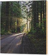 Sunburst At Redwood National Park Wood Print