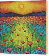 Sunburst Poppies Wood Print