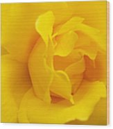 Sunburst Rose Flower Wood Print