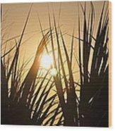 Sundown Through The Grass Wood Print