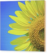 Sunflower Against Blue Sky Wood Print