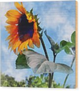 Sunflower Against The Sky Wood Print