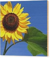 Sunflower Alone Wood Print