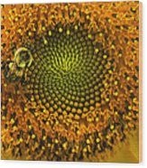 Sunflower An Bumble Wood Print by Brittany Perez