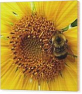 Sunflower And A Bee Wood Print