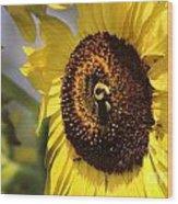 Sunflower And Bee-3922 Wood Print