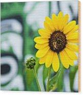 Sunflower And Graffiti  Wood Print