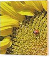 Sunflower And Ladybug Wood Print