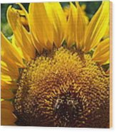 Sunflower And Two Bees Wood Print