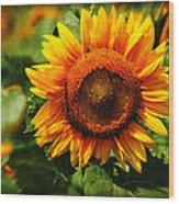 Sunflower At Buttonwood Farm Wood Print
