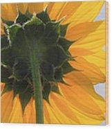 Sunflower Back Wood Print