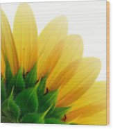 Sunflower Backside Wood Print