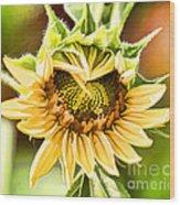 Sunflower Beauty - Painterly Wood Print