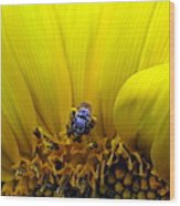 Sunflower Bee Wood Print
