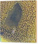 Sunflower Bees Wood Print