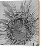 Sunflower Black And White Wood Print