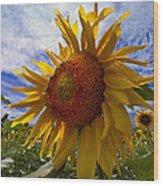 Sunflower Blue Wood Print by Debra and Dave Vanderlaan