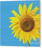 Sunflower Blue Sky Wood Print