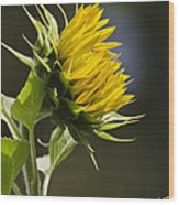 Sunflower Bright Side Wood Print