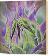 Sunflower Bud Abstract Wood Print