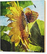 Sunflower Butterfly And Bee Wood Print