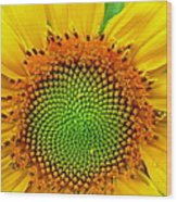Sunflower Center Wood Print
