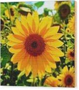 Sunflower Centered Wood Print