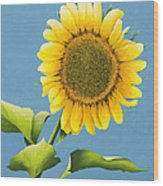 Sunflower Charm Wood Print