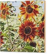 Sunflower Cluster Wood Print