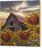 Sunflower Dance Wood Print by Debra and Dave Vanderlaan