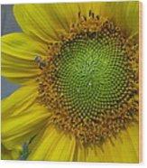 Sunflower Dew-bee Wood Print