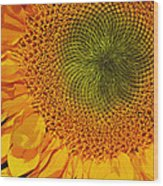 Sunflower Digital Painting Wood Print