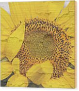 Sunflower Drying Up Wood Print