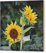 Sunflower Duo Wood Print