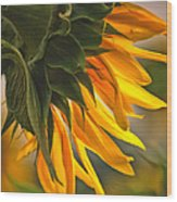 Sunflower Farm 1 Wood Print