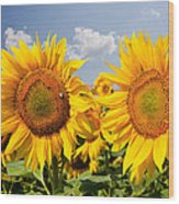 Sunflower Field And Blue Sky Wood Print