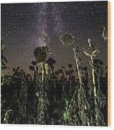 Sunflower Field At Night Wood Print