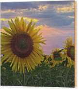 Sunflower Field Wood Print by Debra and Dave Vanderlaan