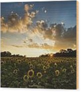 Sunflower Field Sunset Wood Print