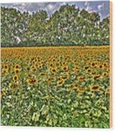 Sunflower Fields Ford World Headquarters Dearborn Mi Wood Print