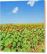 Sunflower Fields Forever Wood Print