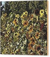 Sunflower Fields Forever Wood Print