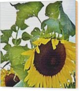 Sunflower Fields Forever Two Wood Print
