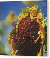 Sunflower Four Wood Print