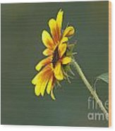 Sunflower From The Side Wood Print
