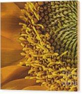 Sunflower Grace Wood Print